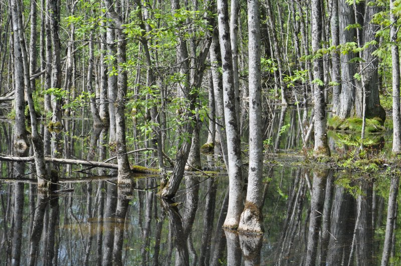 Southern Quebec Wetland