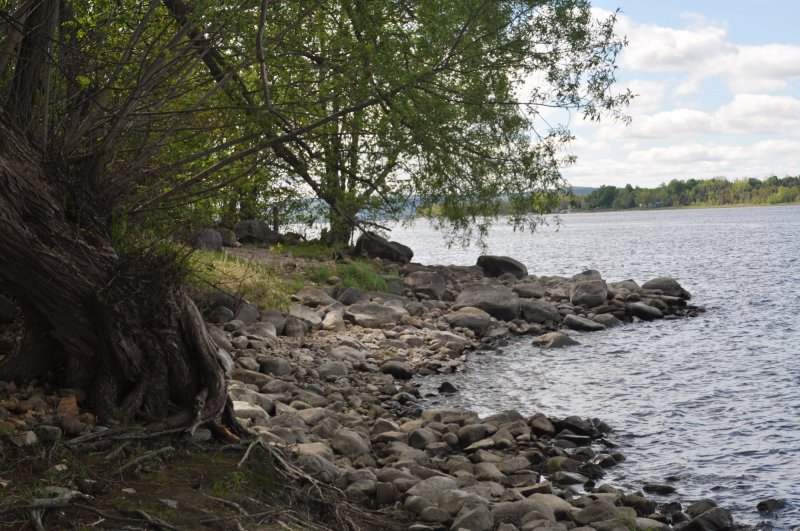 Ottawa River Littoral Zone
